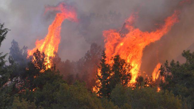 La stagione degli incendi il difficile lavoro dei Vigili del Fuoco in estate